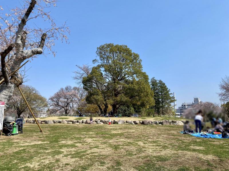 高井戸公園の芝生エリア